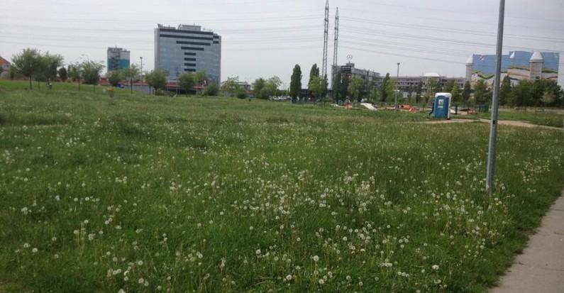 Jak sekat trávu a neporušit zákon?
